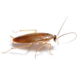 photo d'un insecte